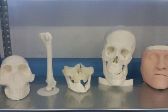 Antropología, Arqueología e Historia